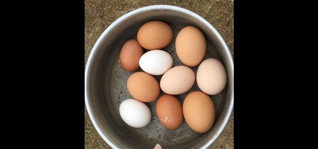fresh eggs from our girls giving us wonderful country breakfasts and tasty biscuits and cakes