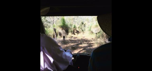 Touring in the All Terrain Vehicle looking at ancient grass trees